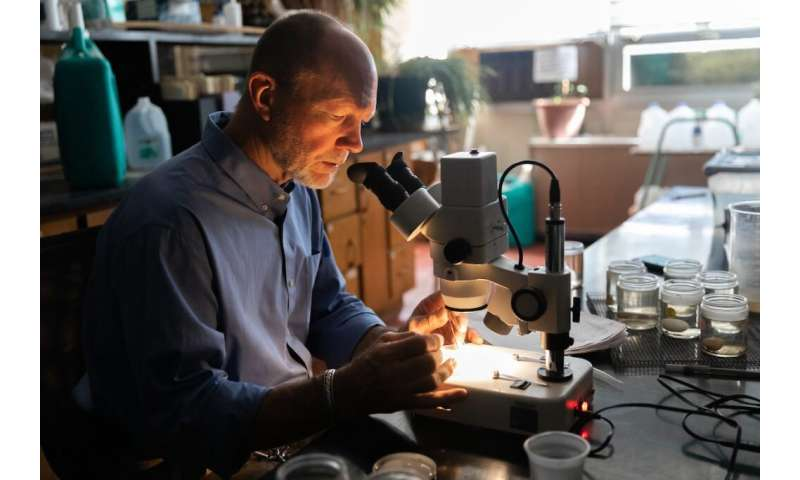 Zoologist proposes selective application of contraceptives as most effective pest control