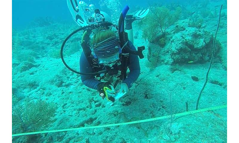 Coral reefs in Turks and Caicos Islands resist global bleaching event