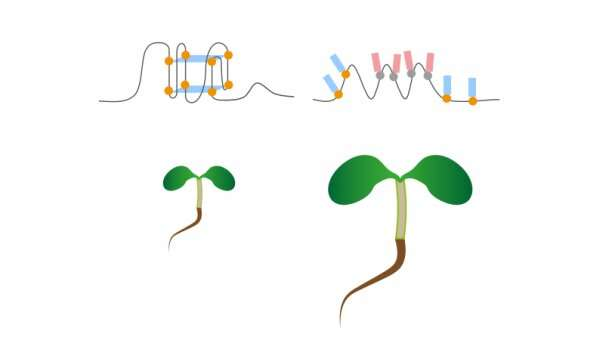 Study reveals RNA G-quadruplex structures in nature for the first time