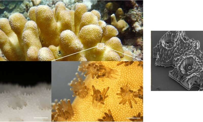 3D-printed corals provide more fertile ground for algae growth