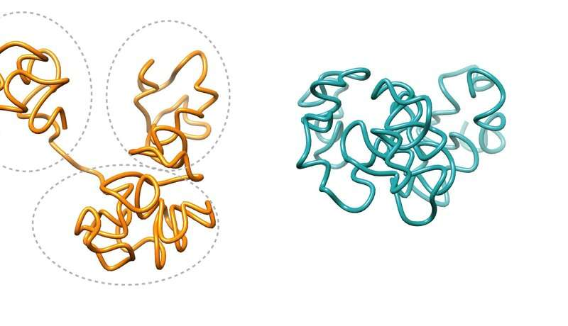 3-D shape of human genome essential for robust inflammatory response