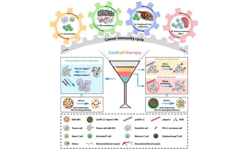 Scientists propose immune cocktail therapy to boost cancer-immunity cycle in multiple aspects