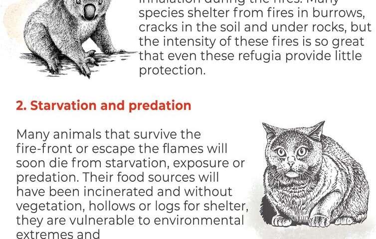 6 million hectares of threatened species habitat up in smoke