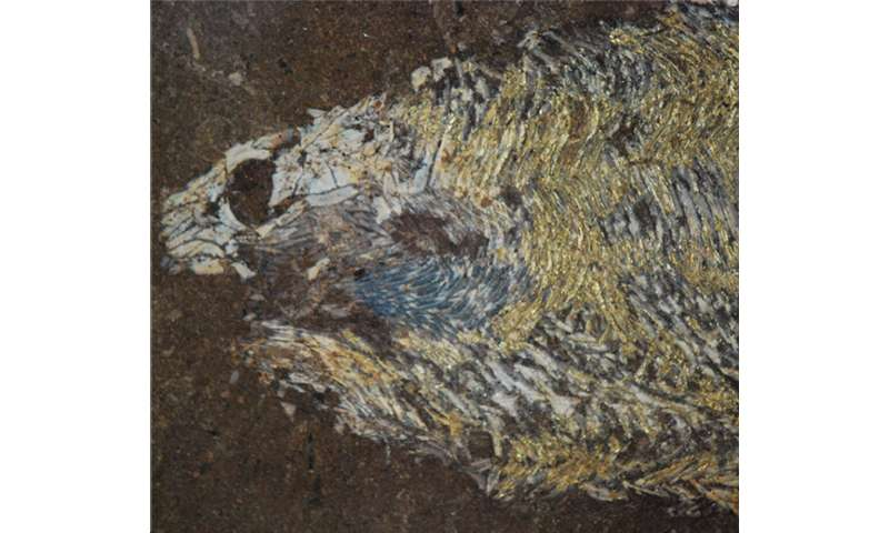 A 'Devonian' aquarium: Modern mutant fishes replicate creatures of ancient oceans