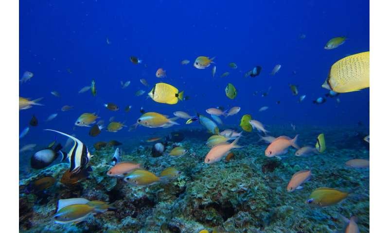Las algas agresivas sofocan uno de los arrecifes más remotos del mundo