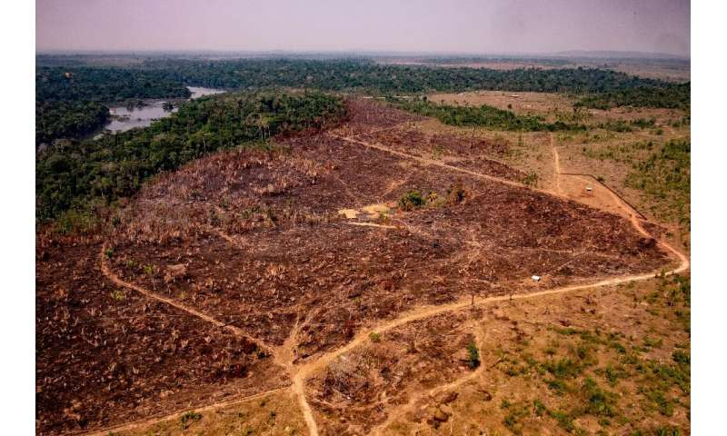 A handout picture released by the Communication Department of the State of Mato Grosso shows deforestation in the Amazon basin i