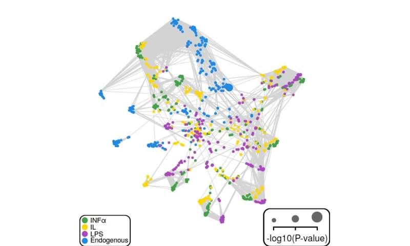 Model miring mesin yang menggabungkan pengetahuan imunologi