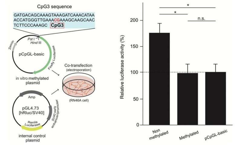 Amygdala changes in male patients with schizophrenia and bipolar disorder