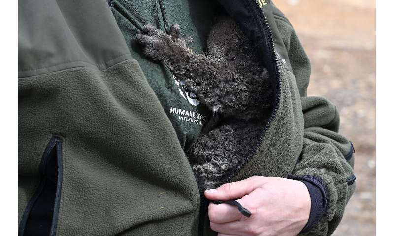 An animal rescue worker holds a baby koala affected by the bushfires on Kangaroo Island