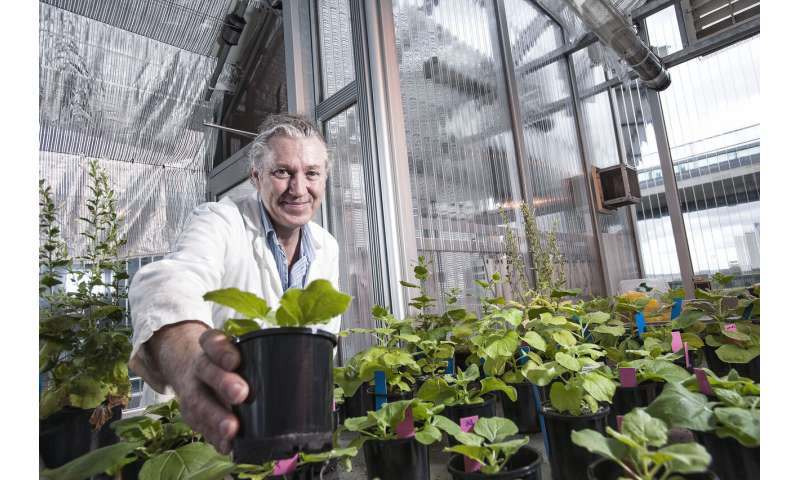 Ancient Australian plant may help in production of COVID-19 vaccine