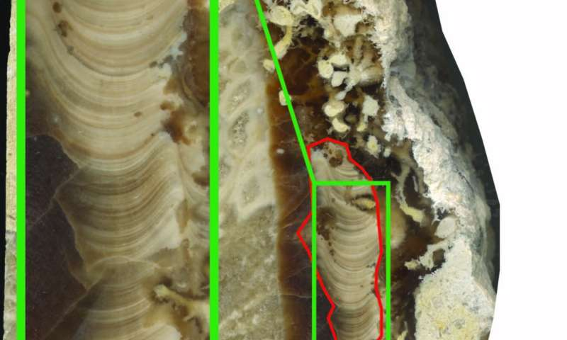 Ancient shell shows days were half-hour shorter 70 million years ago