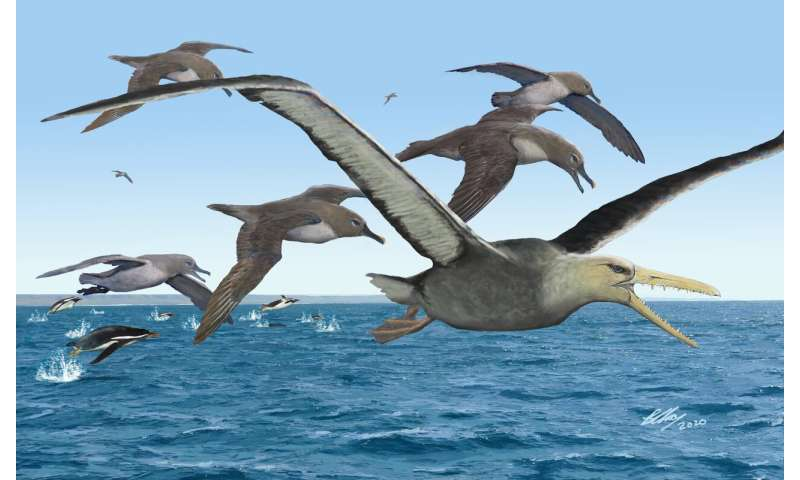 Antarctica yields oldest fossils of giant birds with 21-foot wingspans