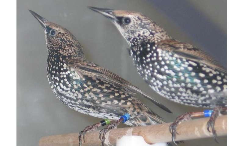 Antioxidant-rich diet reduces stress response during bird migration