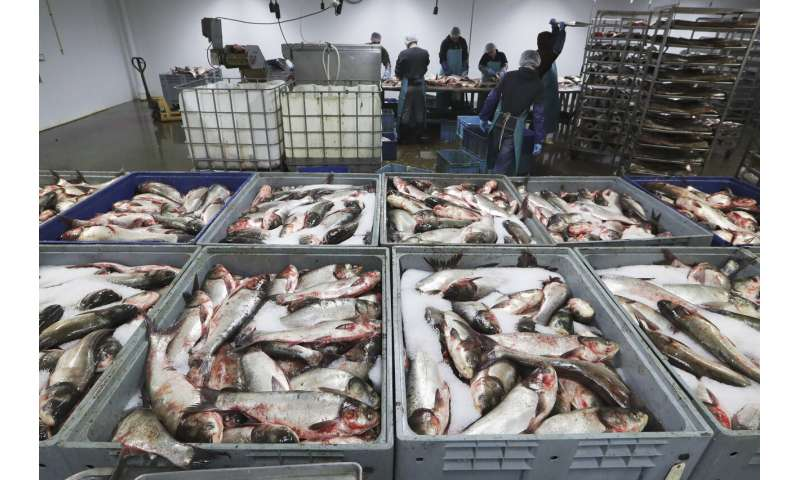 Asian carp roundup in Kentucky opens new front in battle