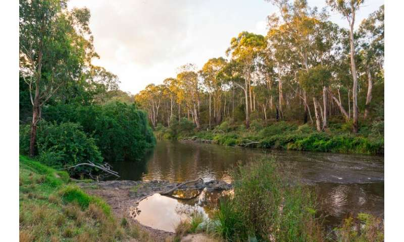 A tale of 2 rivers: is it safer to swim in the Yarra in Victoria, or the Nepean in NSW?