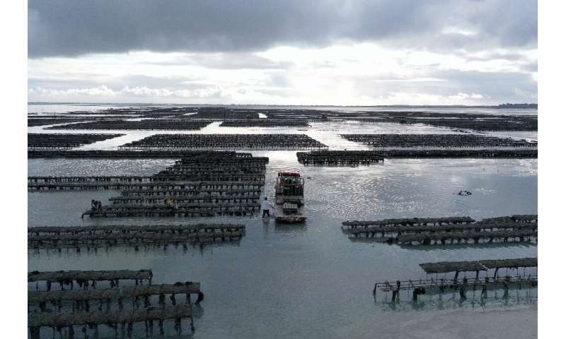 Authorities halted oyster sales at 23 French fields after testing revealed norovirus contamination.