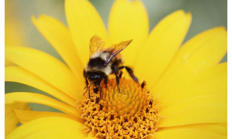 Bees use shark 'supersense' to help find food