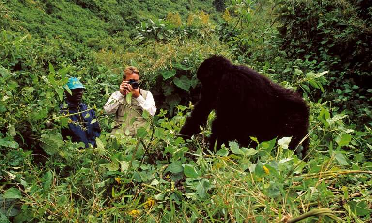 Behind the mask – In search of gorilla-friendly tourism