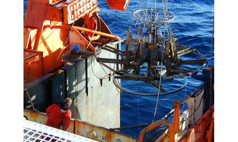 Benthos in the Antarctic Weddell Sea in decline
