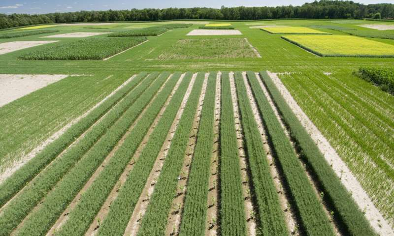 Big data helps farmers adapt to climate variability