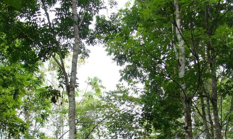 Biological diversity as a factor of production