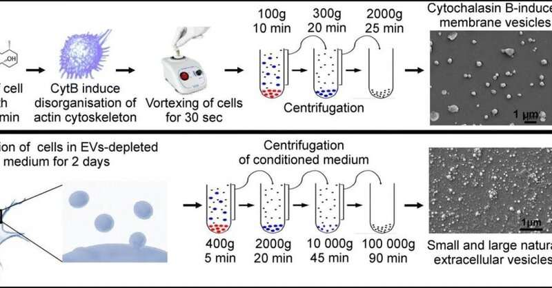 Biomedical instrument based on microvesicles