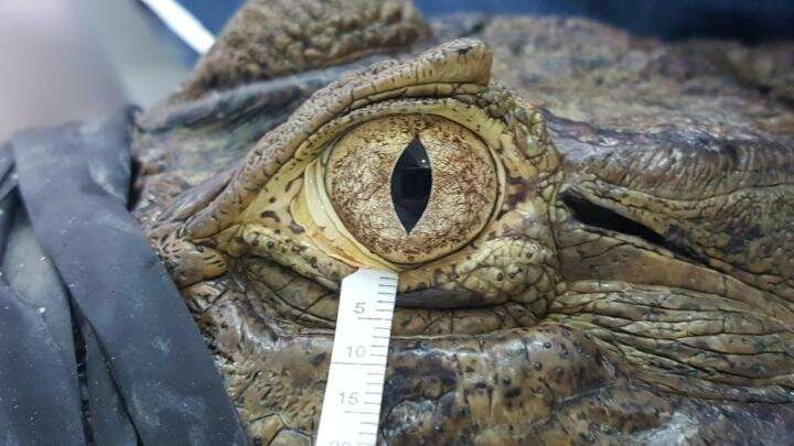 Bird and reptile tears aren't so different from human tears