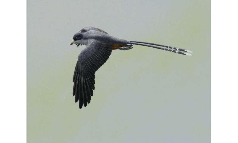 Bird beak revealed by HKU-codeveloped laser imaging informs early beak function and development