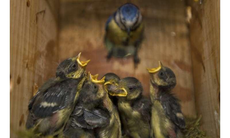 Los nidos de pájaros atraen insectos voladores y parásitos debido a los niveles más altos de dióxido de carbono