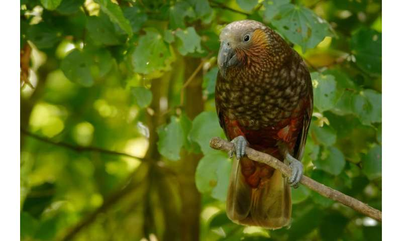 Bird species are facing extinction hundreds of times faster than previouslythought