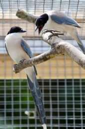 Birds share food with less fortunate conspecifics