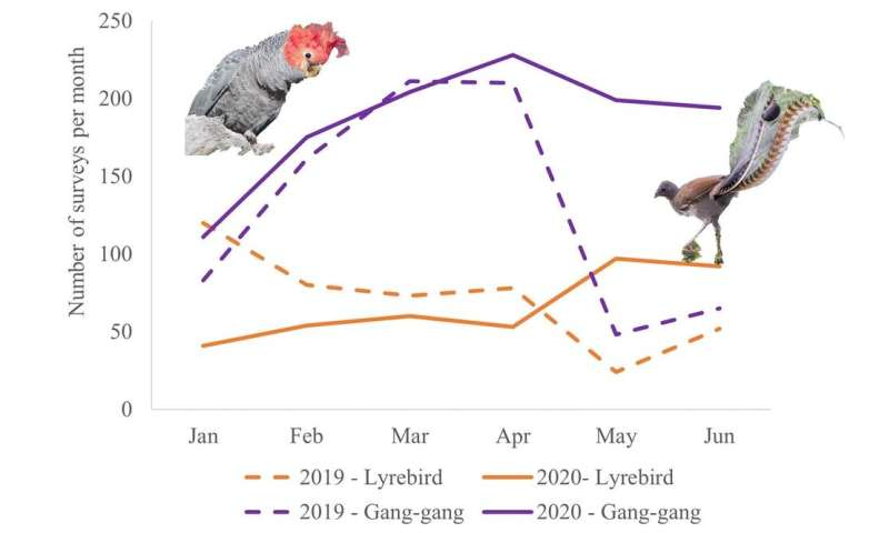 Birdwatching increased tenfold last lockdown. Don't stop, it's a huge help for bushfire recovery