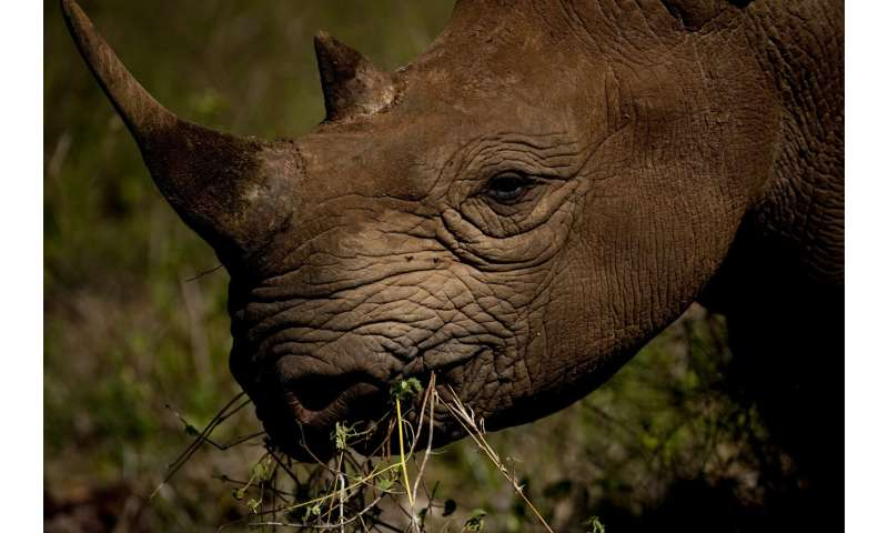 Black rhino population shows steady growth