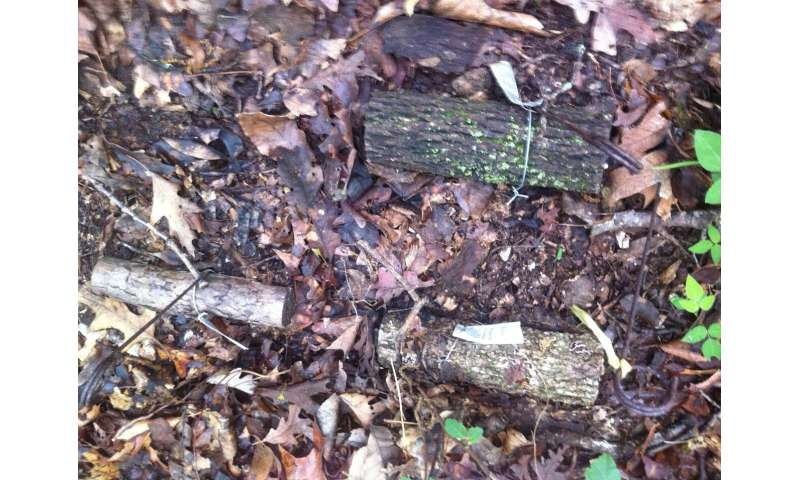 Breaking down wood decomposition by fungi