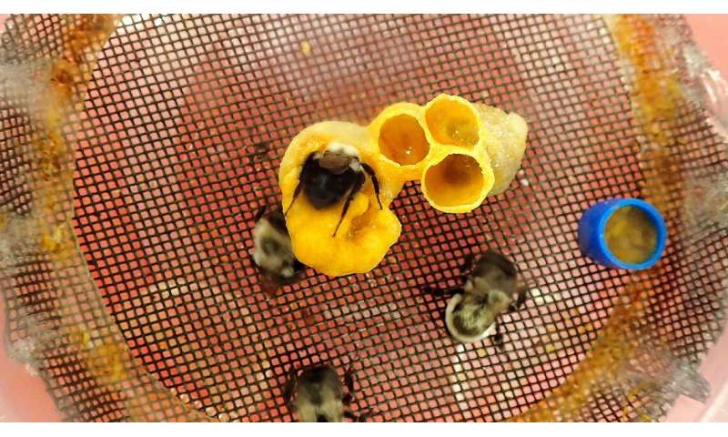 Bumblebees aversion to pumpkin pollen may help plants thrive