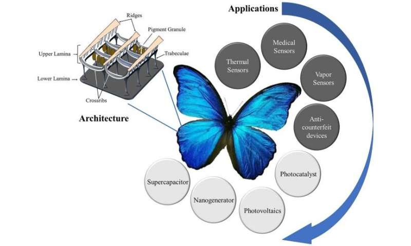 Butterfly wings inspiring next-gen technological innovations