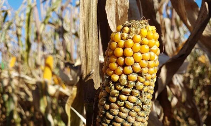 ¿Pueden los productos fitosanitarios orgánicos dañar los cultivos?