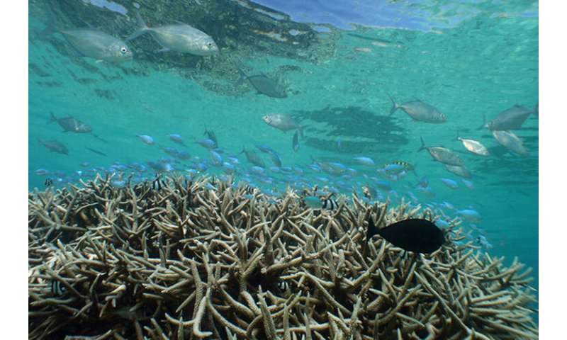 Caribbean coral reef decline began in 1950s and 1960s from local human activities