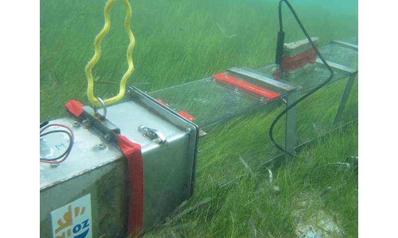 Caribbean islands face loss of protection and biodiversity as seagrass loses terrain