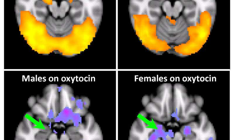 Chemicals between us: Surprising effects of oxytocin on cocaine addiction