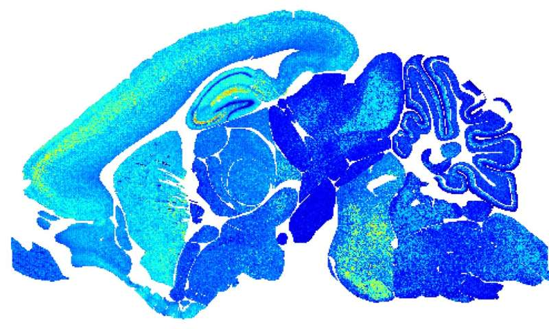 Clues to ageing come to light in vivid snapshots of brain cell links