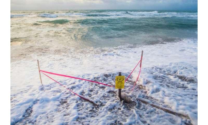 Coastal development, changing climate threaten sea turtle nesting habitat