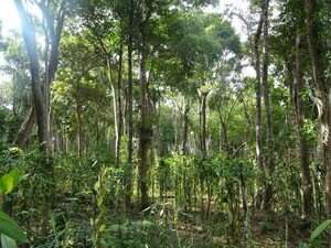 Coffee, cocoa and vanilla: an opportunity for more trees in tropical agricultural landscapes