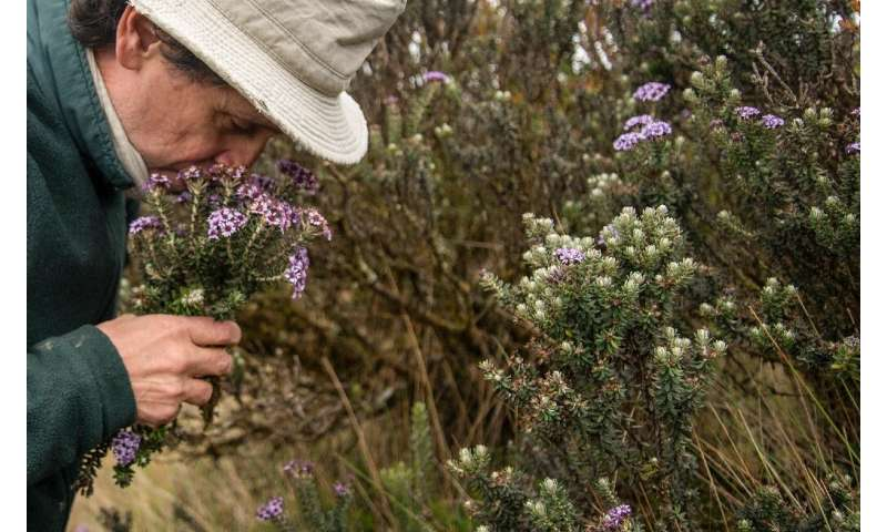 Colombian botanist Julio Betancur  documents all the plants he collects in a book of the South American country's vast biodivers