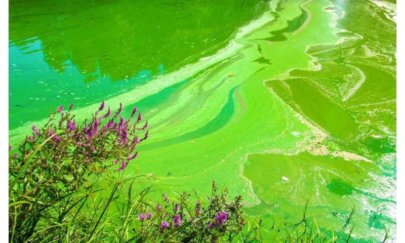 Controlling light could leave toxic algae dead in the water, MU researchers find