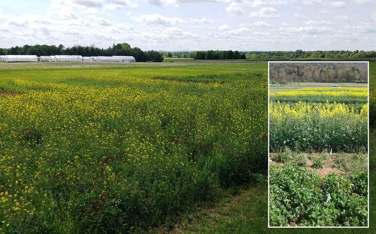 Las mezclas de cultivos de cobertura deben estar 'adaptadas a la granja' para proporcionar los máximos servicios ecosistémicos