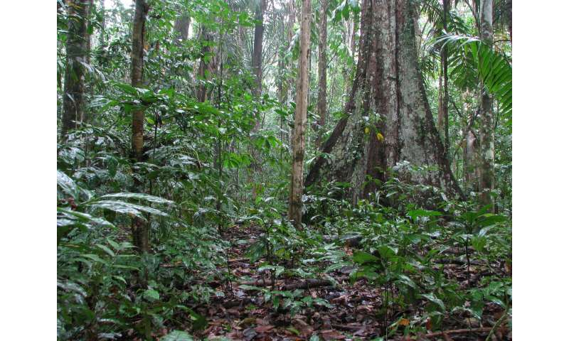 Critical temperature for tropical tree lifespan revealed