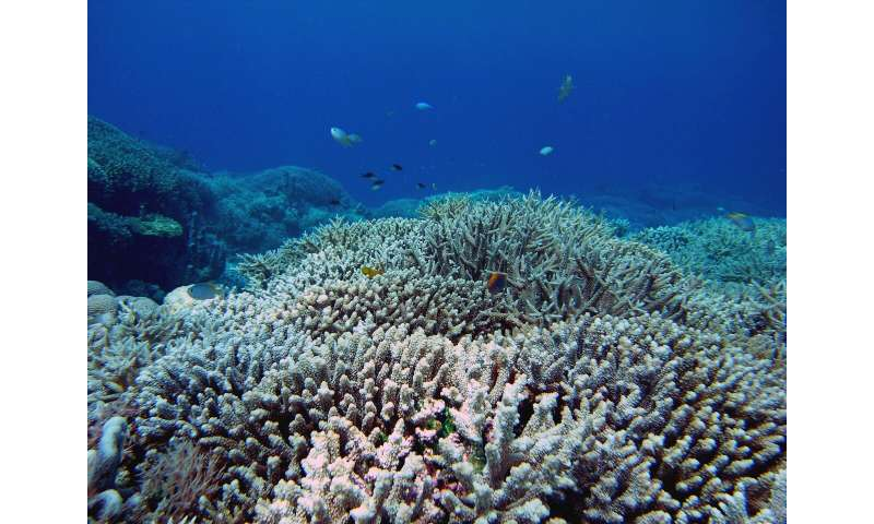 Cyclones can damage even distant reefs