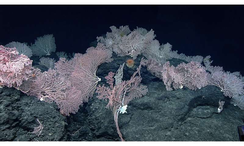 Misunderstandings in the deep sea led to underestimation of the impact of seabed mining