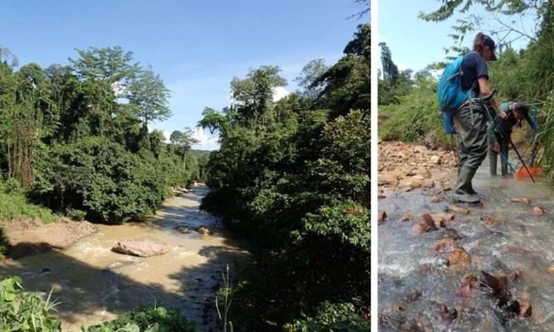 Deforestation in the tropics causes declines in freshwater fish species